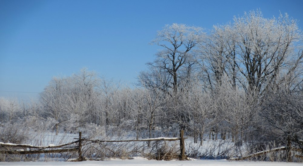 finger lakes weather forecast cold start to spring icy trees below normal temperatures sunny
